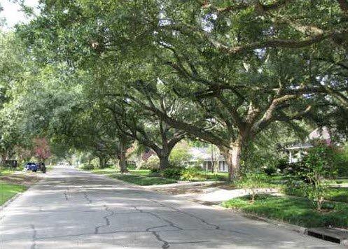treed-streets-longwood-drive-baton-rouge