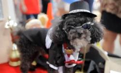 Baton Rouge Mardi Gras Videos Mystic Krewe of Mutts Parade